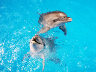 posing dolphins in the water