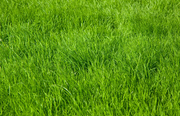 Green grass lawn background