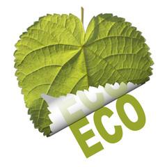 feuille enroulée revers Eco