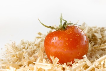 fresh tomato with water drops in sawdust over white