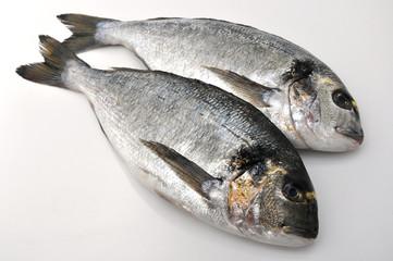 Pesce - Orate di mare