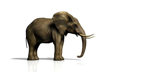elefant seitlich