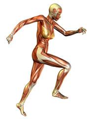 Wall Mural - Laufstudie Muskelaufbau Frau