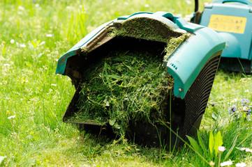 erba tagliata in contenitore