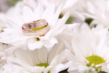 Wedding rings on chrysanthemum