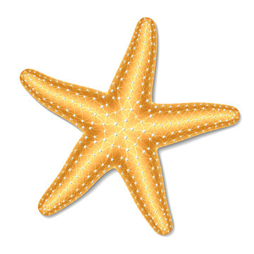 Starfish. Vector illustration.