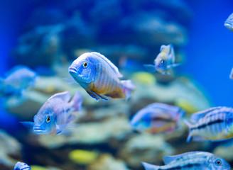 Blue saltwater world