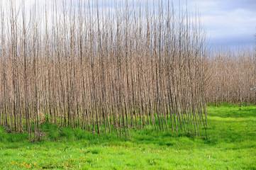 alberi 950
