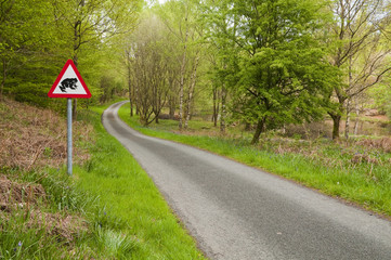 English country lane with Toad crossing sign