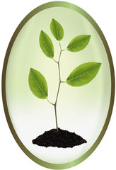 Photo-realistic vector illustration. Label with young plant.