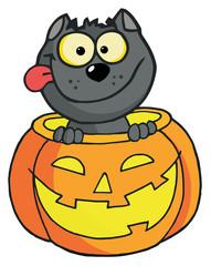 Happy Cat In A Pumpkin