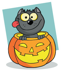 Happy Black Cat In A Pumpkin
