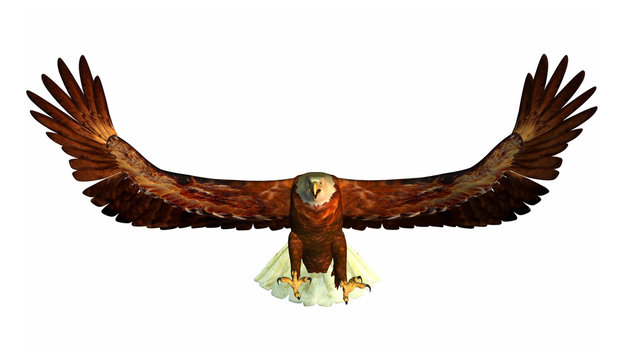 aigle chasseur