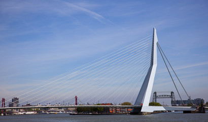 Poster Swan erasmus bridge in the centrer of rotterdam