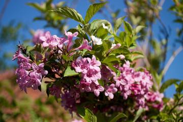 Groupe de fleurs violettes mauves sur la branche d'arbre