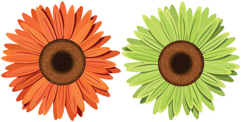 Flowers. Vector