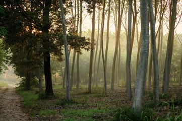 alberi 805
