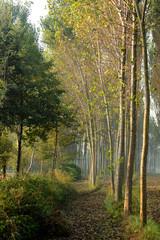 alberi 807