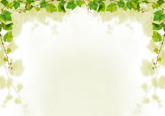 Grapevine background