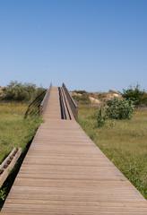 The bridge to ocean