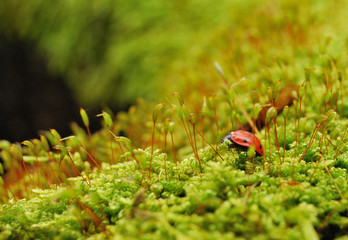 насекомые и растения