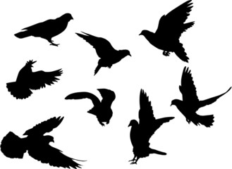 eight dove silhouettes