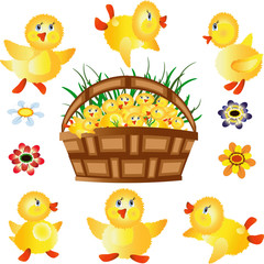 Basket ,ducklings