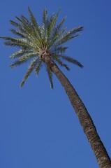 Palme tree in the sky