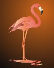 Pink flamingo against a dark background