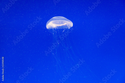 Wall mural Jelly fishes in Aquarium