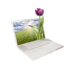 Silver Computer Laptop Isolated with Tulip
