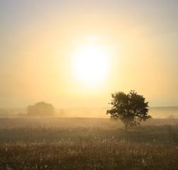Fototapete - single tree in mist