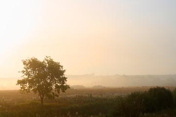 Wall Mural - single tree in mist