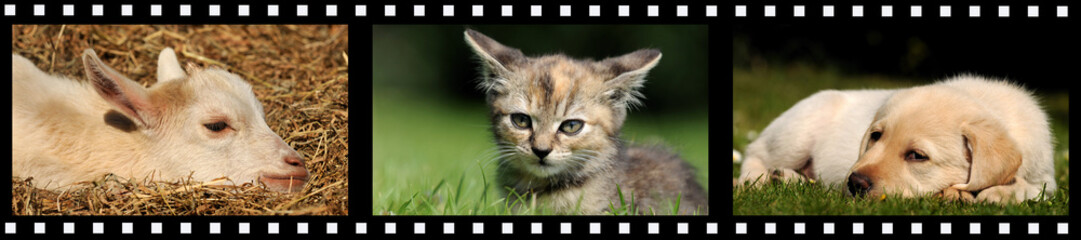 Filmstreifen Tierkinder