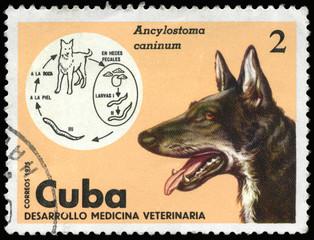 CUBA - CIRCA 1975 Dog