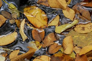 foglie 487