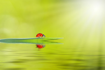 ladybug with sun beams and water reflection