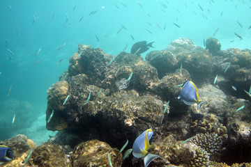 Coral reef with tropical fishes