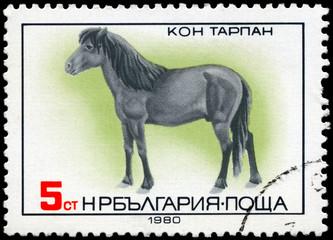 BULGARIA - CIRCA 1980 Tarpan Horse