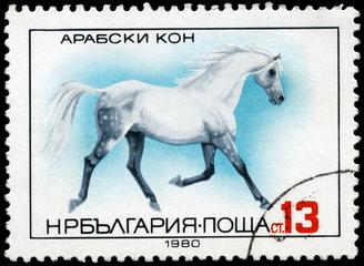 BULGARIA - CIRCA 1980 Arab Horse