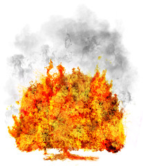 isolated tree in fire on white, symbol