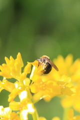 Life in yellow colour - bees, flies and bugs.