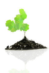 Vigorous young plant in a pile of rich soil - isolated