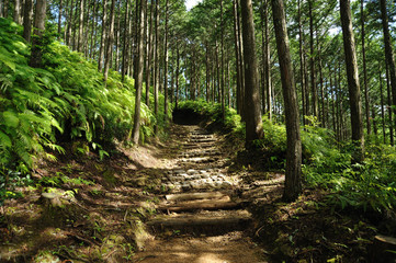 熊野古道 中辺路