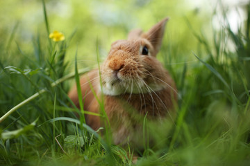 Rabbit in green grass. Shallow DOF, focus on eyes.