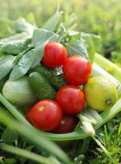 Organic food outdoors: tomato, cucumber, green onion, lemon