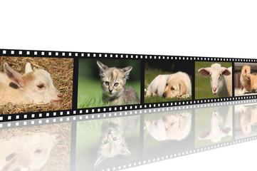 Tierkinder Filmstreifen