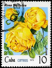 CUBA - CIRCA 1979 Yellow Rose