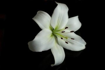 Canvas Prints Lily lilia
