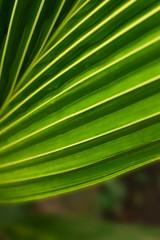 Long-plant